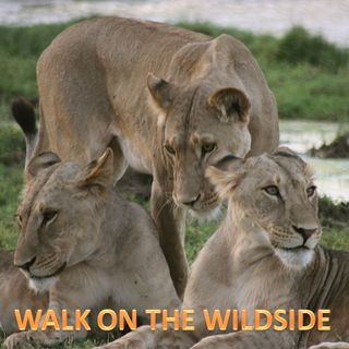 Walk on the Wildside