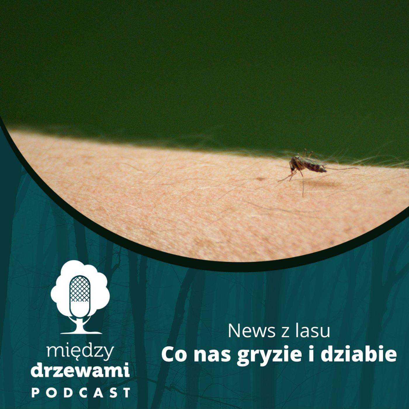 News z lasu - Co nas gryzie i dziabie [opowiada: Michał Wieciech]