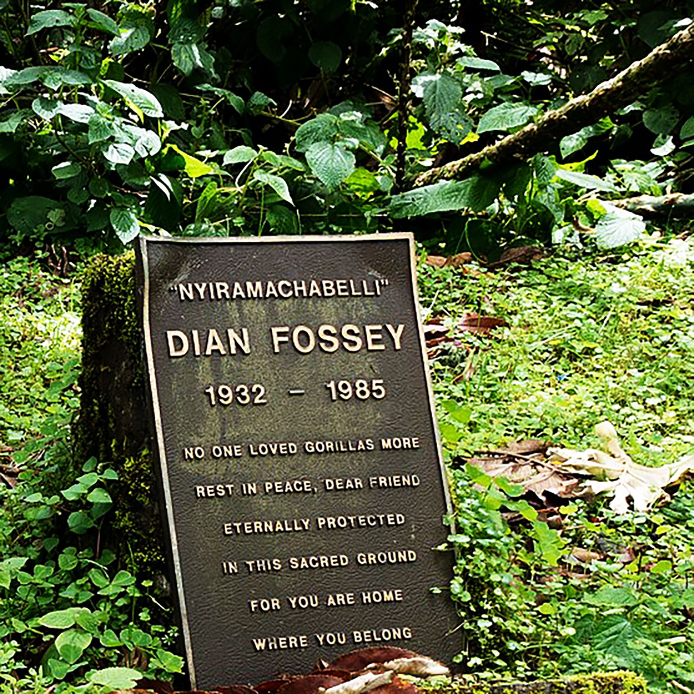 S5E1. Dian Fossey: Til kamp for bjerggorillaerne