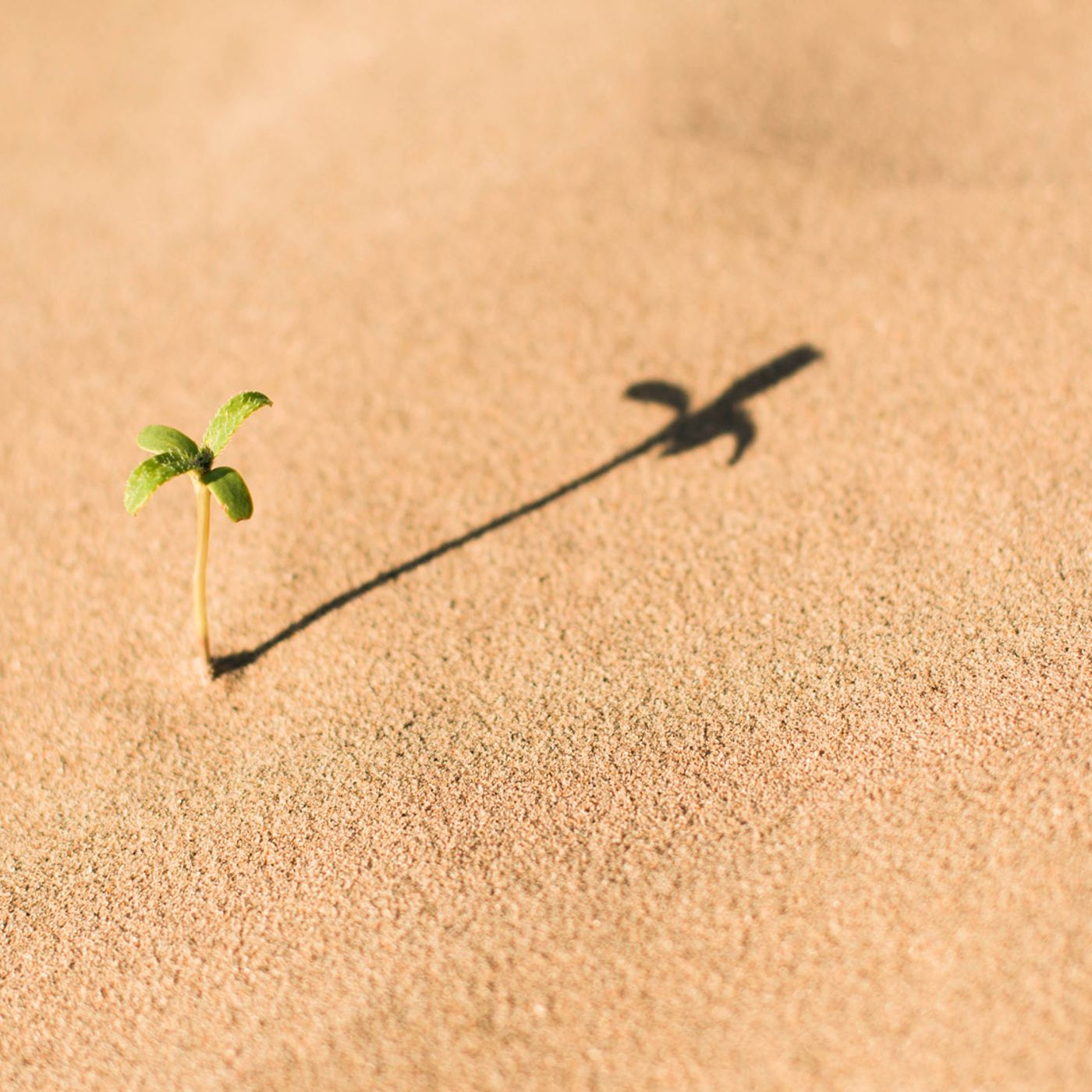#40 - Åndelig vækst eller åndelig stress