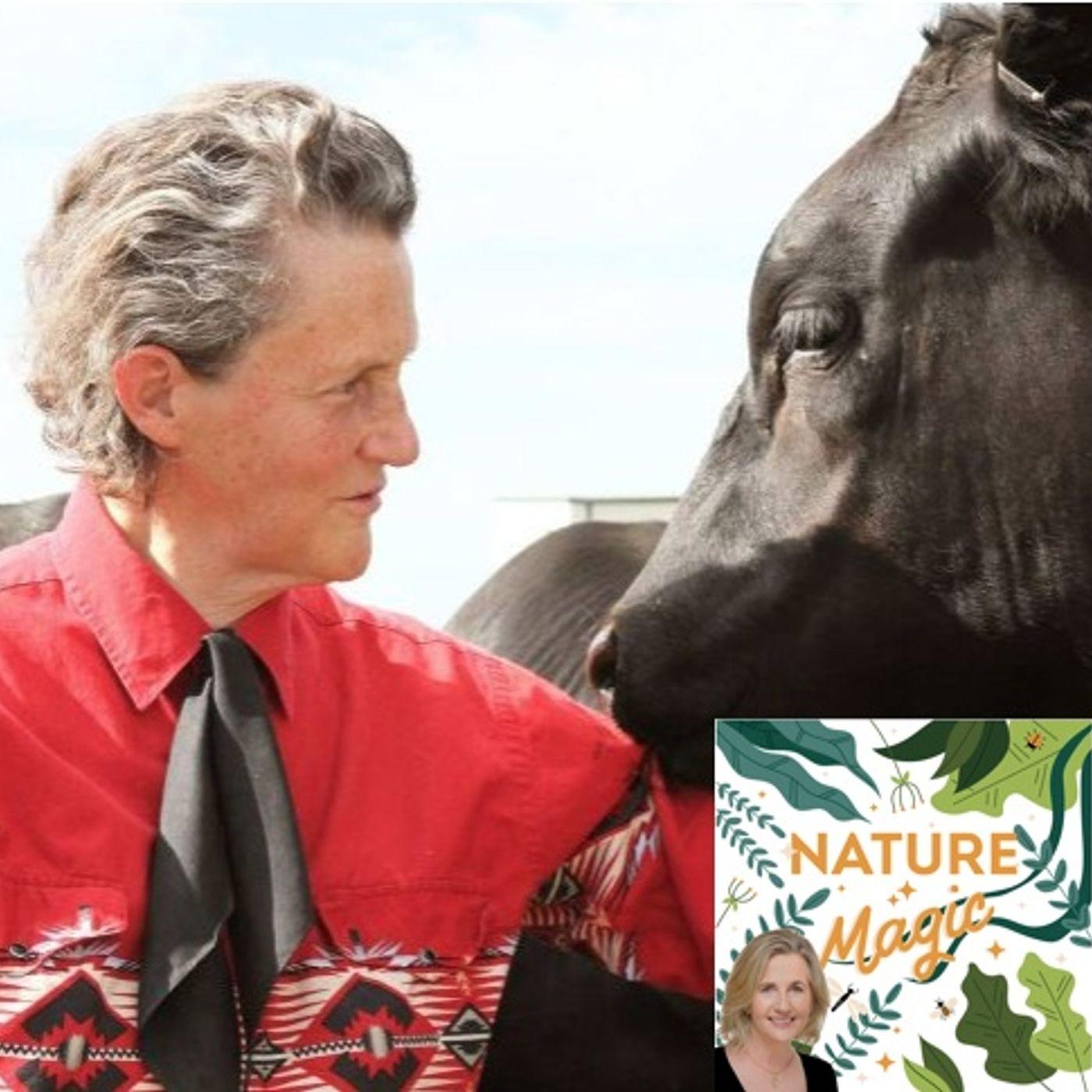 Episode 28 Professor Temple Grandin on the bovine mind