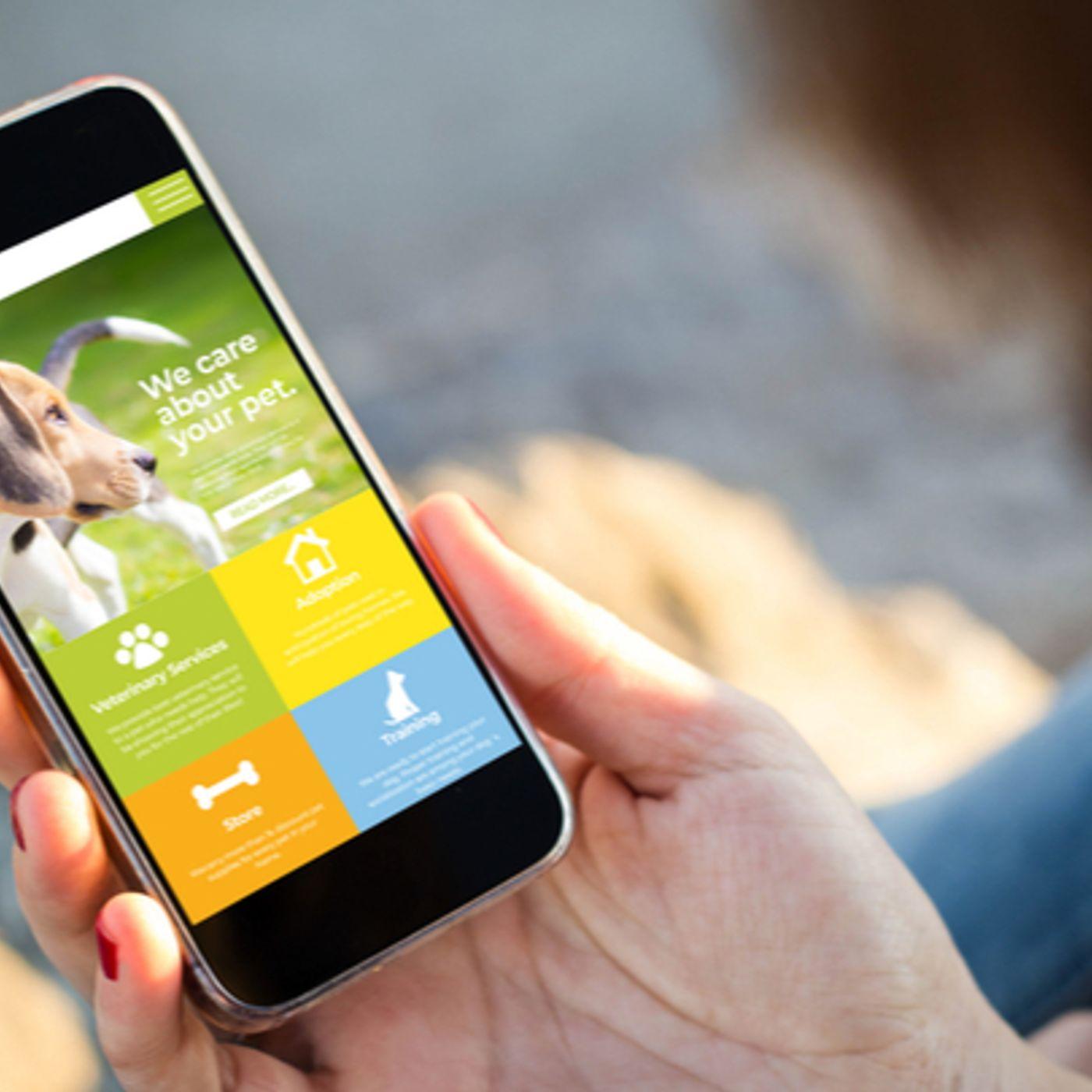 Alimentation, garde…: comment le marché animalier innove avec le numérique