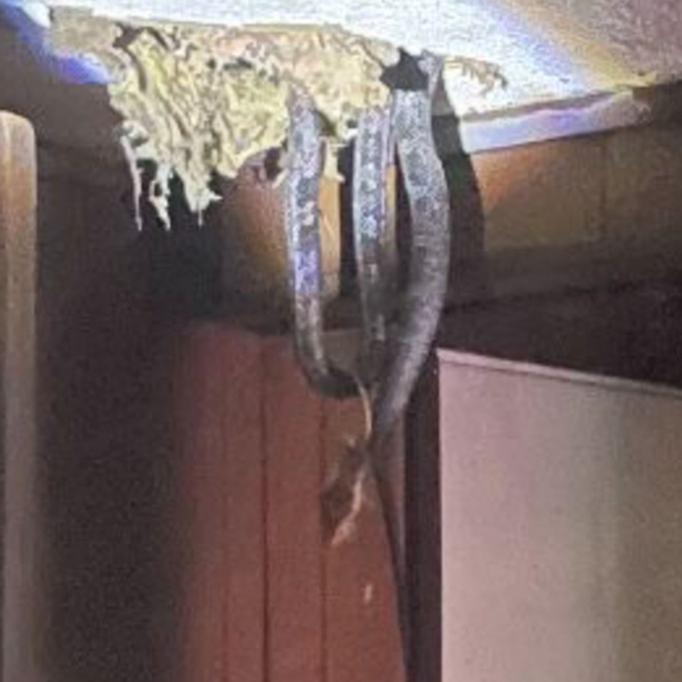 We talk to a family that had SNAKES fall through their ceiling
