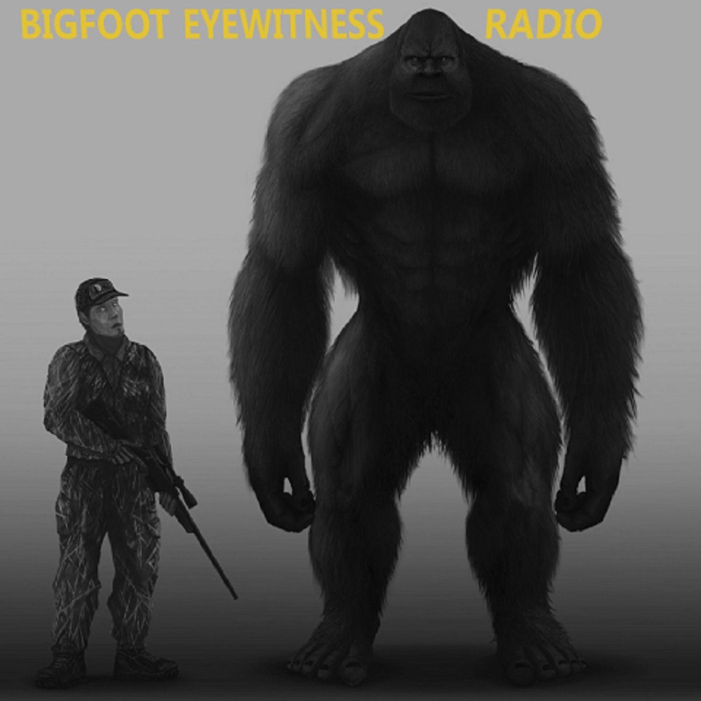 Bigfoot Eyewitness Episode 293 (The Old Man of the Woods)