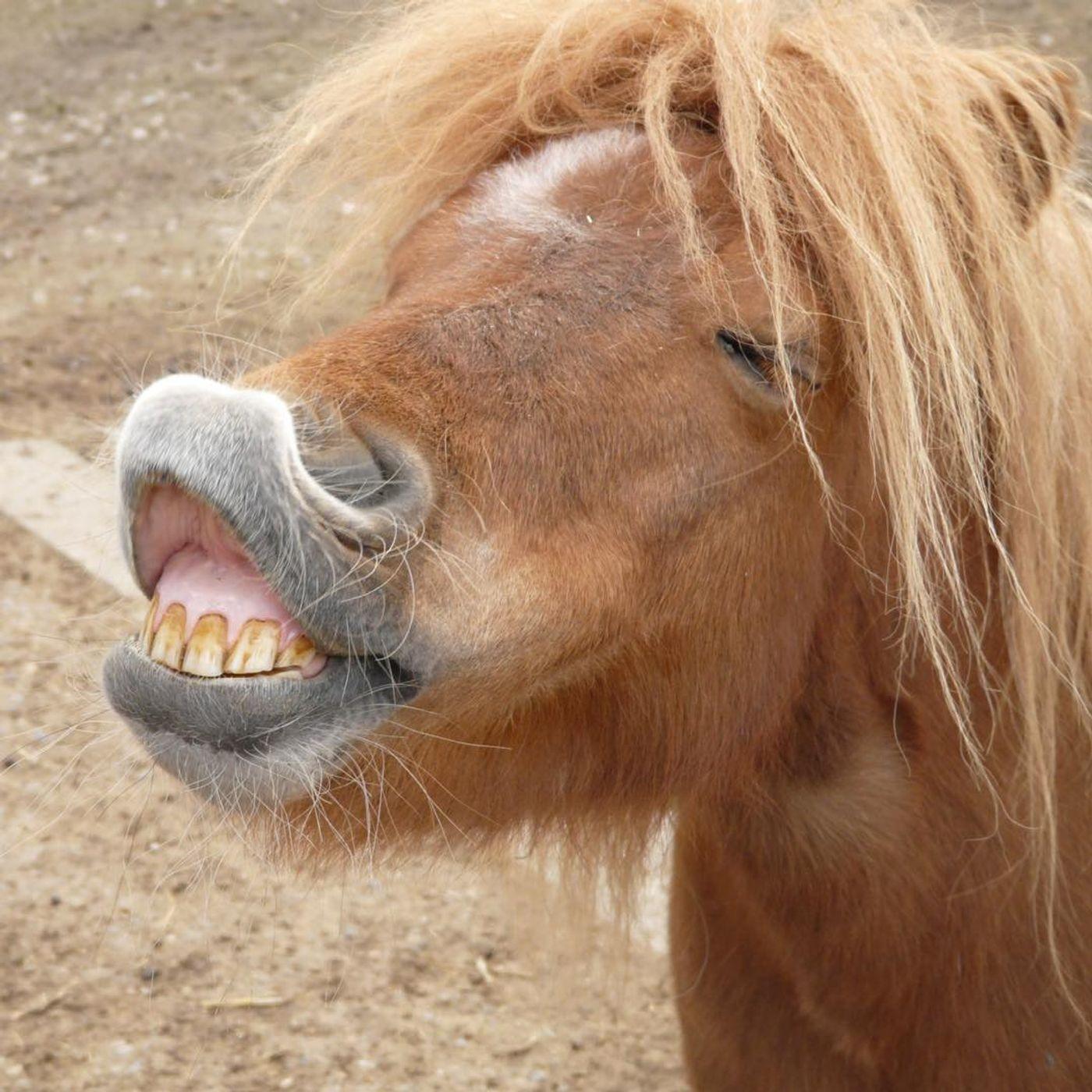 Ginuwine X Tera Kòrá - Pony