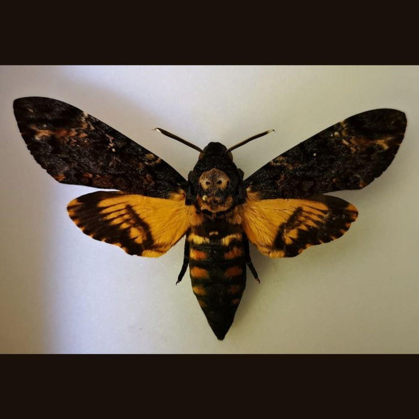 Omicidi, alibi e insetti