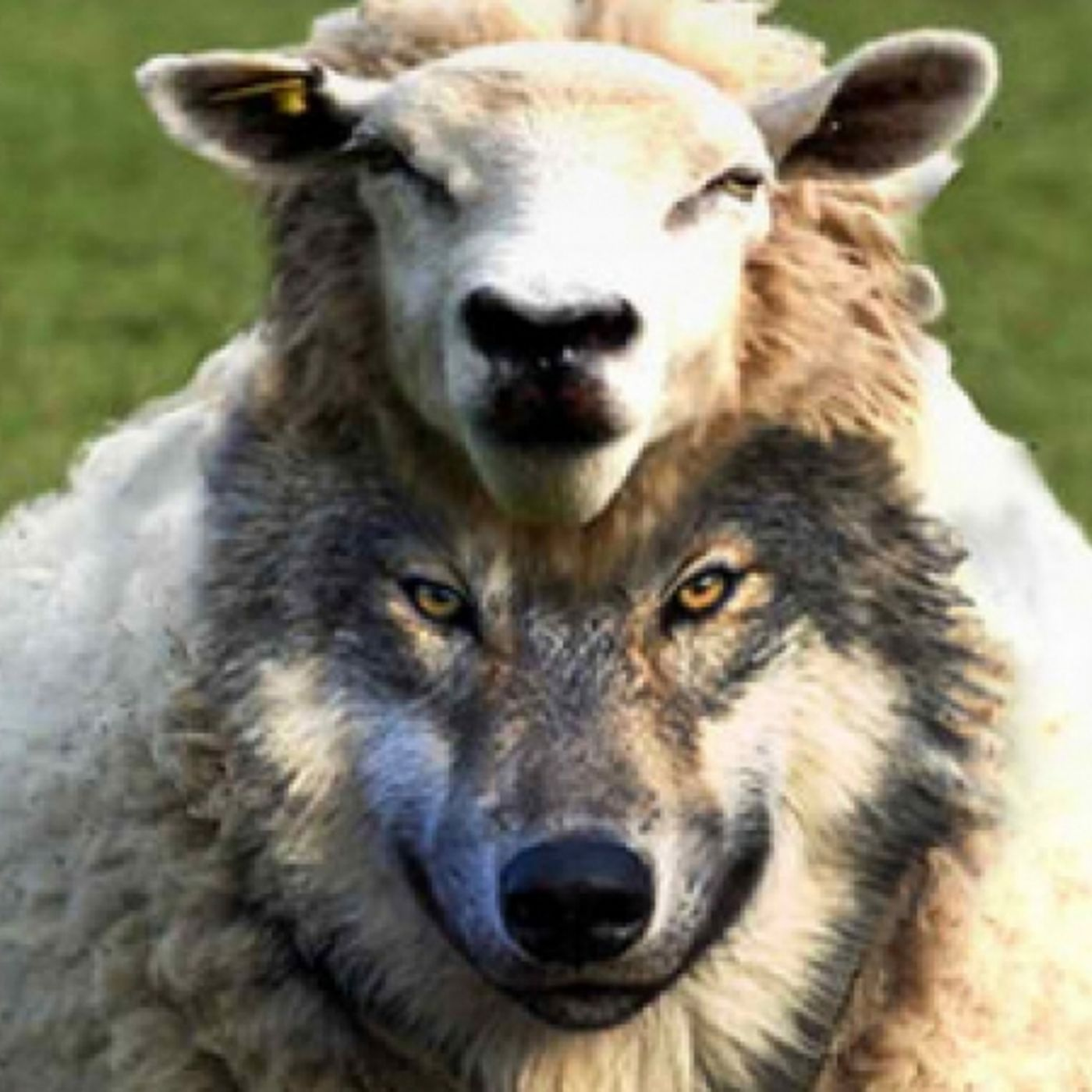 Politicians and Goverment Officials are False Prophets