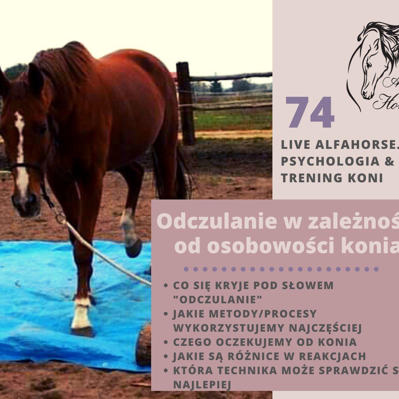 Live 74: Odczulanie w zależności od osobowości konia