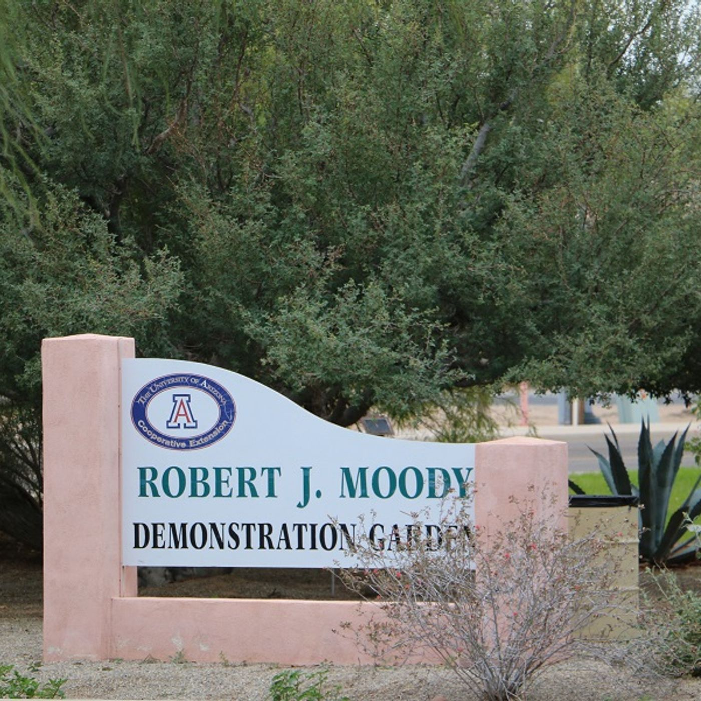 Robert J. Moody Demonstration Garden in Yuma, AZ - Marylou Milstead and Bill Moody on Big Blend Radio