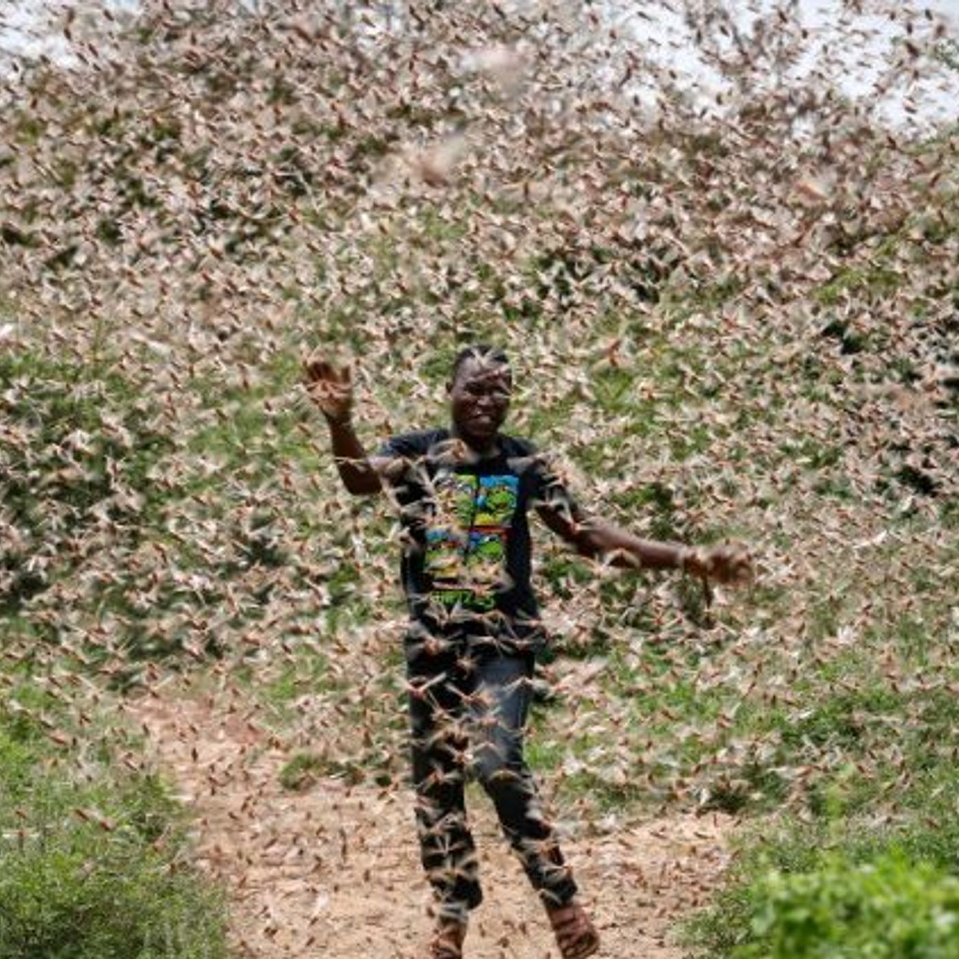 The Locust Outbreak and Biblical Prophecy