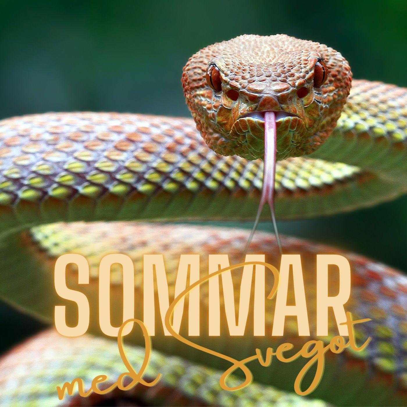 148. Politiker är ormar (Sommar med Svegot #9)
