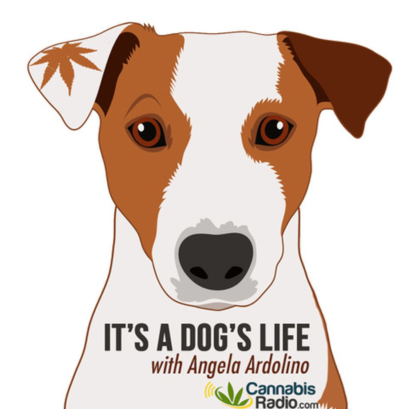 Adrenal Disorders in Dogs with Dr. Ruth Roberts