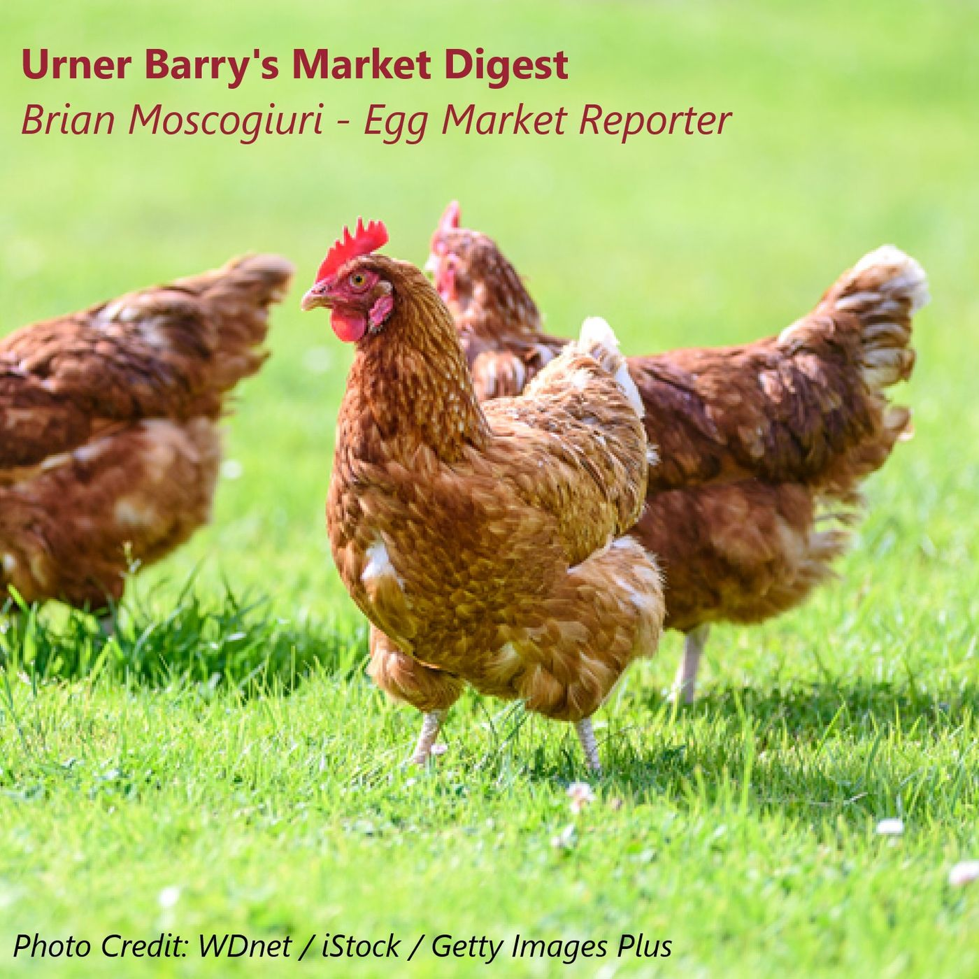Rolling with the Punches: Cage-Free Expansions and More Impacting the Egg Market