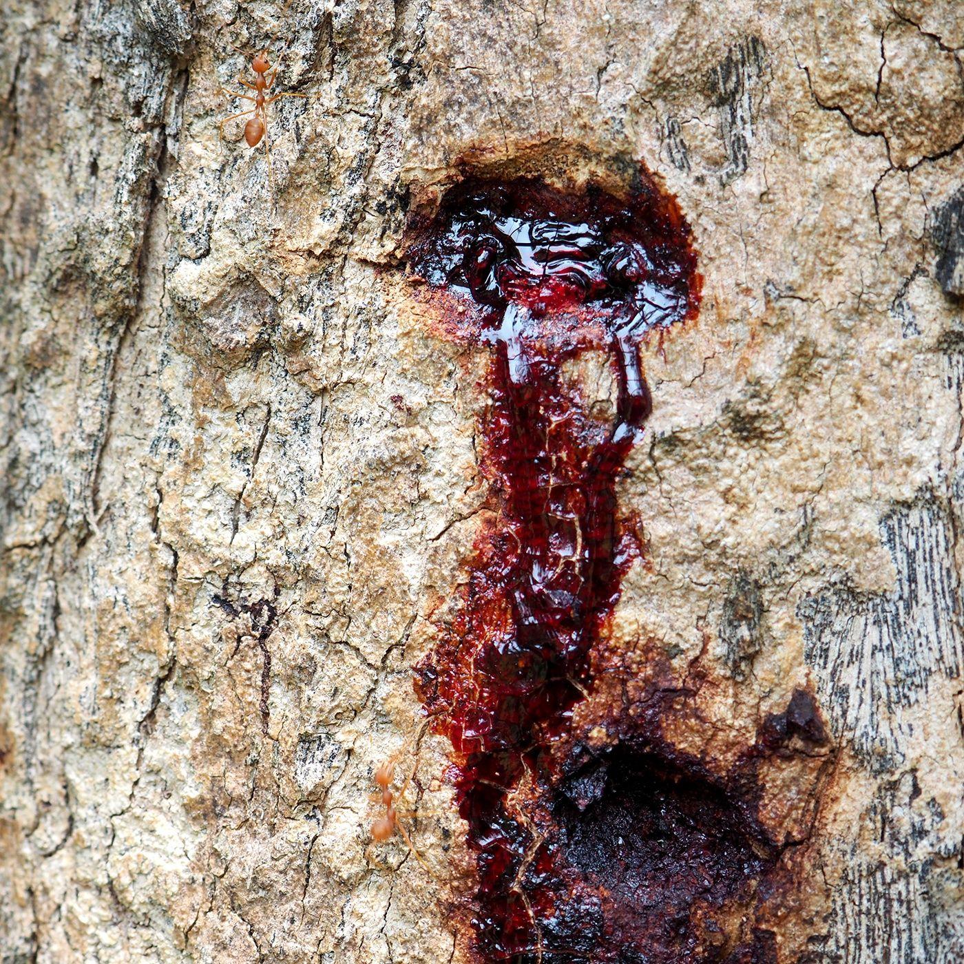 3 - Cicatrices de la Terre-Mère