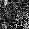 A thousand faces of Capitani Coraggiosi