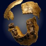 The First Human of Olduvai