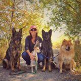 WSK9CO Dog Training