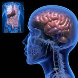 Leaky Gut, Leaky Brain: The mysterious link explained. Featuring Craig Burton