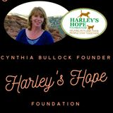 Harley's Hope Foundation A Safety Net For Pet Parents
