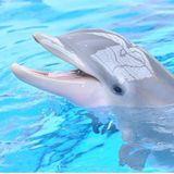 Buongiorno ☀️💕✨ in connessione ai delfini e all'acqua! 🐬💫💧