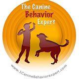 Positive Dog Training Live Radio GR