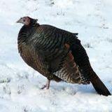 Episode 132 - Cold Turkey