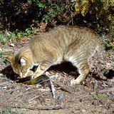 Endangered - Caccia ai gatti