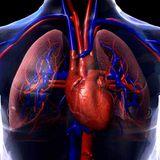 Entrevistas sobre el Sistema Circulatorio. PMAR II. 3ºESO