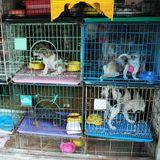 Iowa Puppy Mills Make Humane Society's 'Horrible Hundred' List
