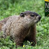 9: e222 - Groundhog day for safety in Formula 1 | The NR F1 Podcast