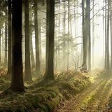 23 Sounds of the forest - Mario Salis