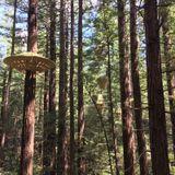 RS11 Rotorua & Redwoods TreeWalk