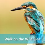 Walk on the Wildside