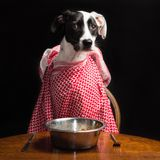 Thanksgiving Dinner And Travel Tips For Pet Owners