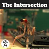 #54: What Insects Could Teach Humans (and Robots) About 3D Vision