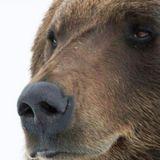 Buongiorno, iniziamo la settimana in connessione all'orso!