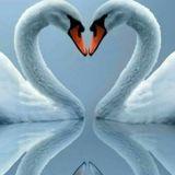 Buongiorno al centro del nostro cuore! 💕✨💗
