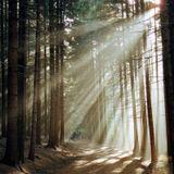 Iniziamo questa giornata con la meditazione di radicamento!