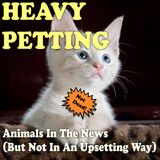 Heavy Petting with Wayne Resnick #54