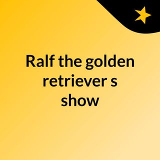 Ralf the golden retriever's show