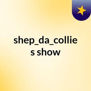 shep_da_collie's show