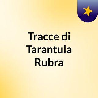 Tarantula Rubra for Children 10.05.15