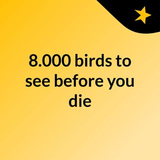 8.000 birds to see before you die