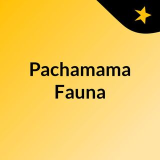 Pachamama Fauna