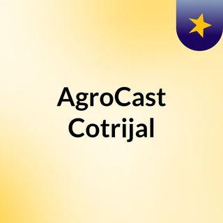 Produtor Adilson De Walle, da Cotrijal, fala sobre a importância do seguro agrícola