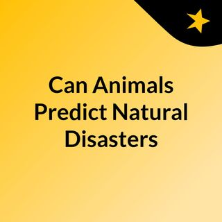 Can Animals Predict Natural Disasters?