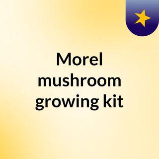 Morel mushroom growing kit