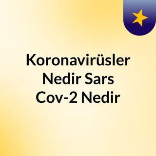 Koronavirüsler Nedir? Sars Cov-2 Nedir? Koronavirüs Bir Bioterör Saldırı Olabilir mi?