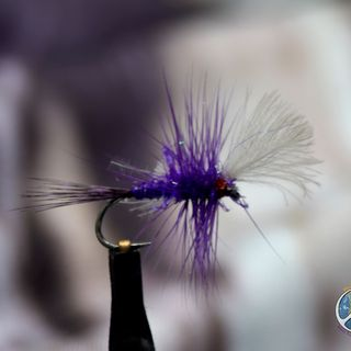 Moment at the Vise _ Purple Cripple