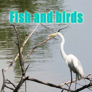 Fish and Birds, Genesis 1:20-23 (OD7)